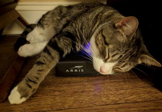 Sorachi_cat